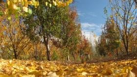 Agroturismo en Neuquén: por qué lo eligen tanto