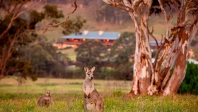 Australia: el complejo Emirates One & Only Wolgan Valley busca involucrar a los turistas en la recuperación de las Montañas Azules