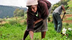 El deterioro ambiental y el hambre en el mundo