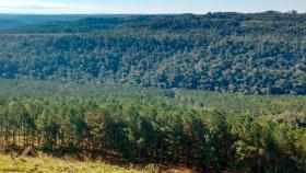 En lo forestal, sumar sería multiplicar