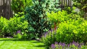 Plantas ornamentales: qué son, tipos, nombres e imágenes