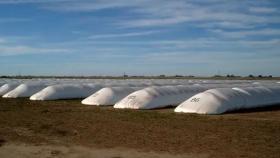 8 pasos para el correcto almacenamiento de granos en silobolsa