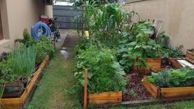 Crecen las huertas orgánicas en casas, escuelas y baldíos en Córdoba y el país