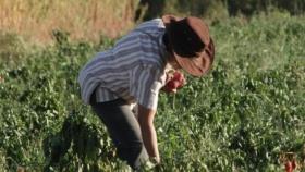 """Mayma BIO: Crearon un programa de mentorías para acompañar a productores que quieran """"transitar"""" hacia la agroecología"""