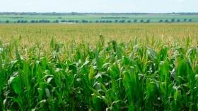 Agro adaptativo: ajustar la demanda agrícola a la oferta variable de agua