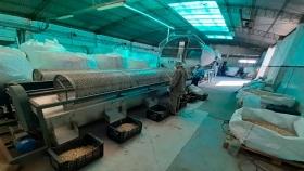 Siguen las inversiones en el cultivo y proceso de pistacho