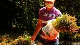 Misiones: el Plan Leña Renovable logró en una década forestar más de 21 mil hectáreas de eucaliptos con fines energéticos