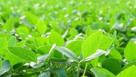 La fertilización nitrogenada biológica (FNB)