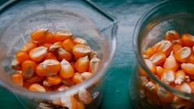 Congreso Maizar: qué tan preparada está la cadena agroindustrial para un futuro biobasado