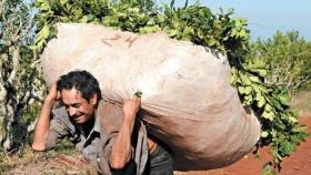 Construirán viviendas para albergar a tareferos mientras dure la zafra de la yerba mate