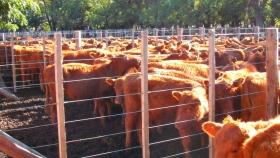 Consignatarios y/o comisionistas de ganado
