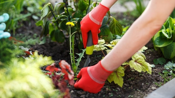 Cómo eliminar las malas hierbas del jardín y el huerto