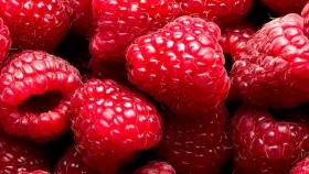 Hortifrut ingresa a la propiedad de BFruit, una de las principales organizaciones de productores de berries en Portugal