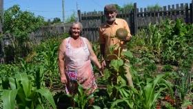 Entre Ríos: una familia produce tres kilos de verdura por día y ahorra más de $4.000 por mes
