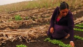 Investigadores publican libro sobre la transición agraria en Paraguay