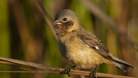 Corrientes declaró monumento natural a un ave en peligro de extinción