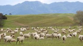 El sector agrícola de Nueva Zelanda se prepara para un 2021 rentable en medio de la turbulencia mundial: informe