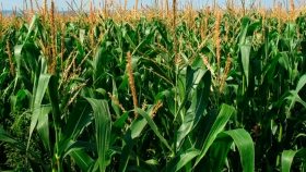 Entre Ríos busca acelerar el debate legislativo sobre buenas prácticas agrícolas y uso de agroquímicos