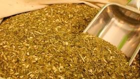 El Gobierno reguló la presencia de palo y polvo en la yerba mate
