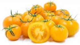 En la india desarrollan tomates amarillos a partir de edición genómica