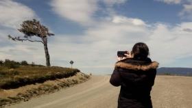 Los árboles más famosos de la Argentina