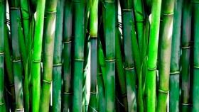 Decoración de jardines con bambú