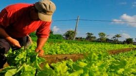 Promueven la aplicación de las BPA para la producción de alimentos en Formosa