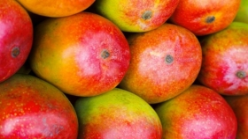 SupPlant ayuda a agricultores mexicanos a reducir el consumo de agua y mejora el rendimiento del cultivo de mango