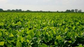 Soja: ISGA en Brasilia para avanzar con países productores