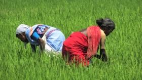 Las leyes agrícolas son la única forma de sacar a la agricultura de la trampa de los bajos ingresos