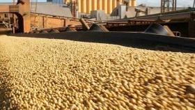Las exportaciones del complejo oleaginoso crecieron un 52,8% durante el primer semestre