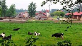 Las vacas en el centro de la bioeconomía japonesa
