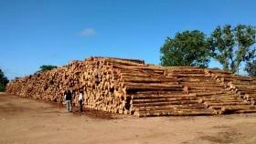 Negocio forestal sustentable: exportaciones, demanda de rollos de madera y escenario para reforestar en la Argentina, ejes del diálogo sectorial del CONFIAR