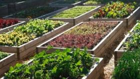 Los Ministerios de Desarrollo Social y Agro y Producción de Misiones trabajan en programa de Huertas Urbanas en toda la provincia