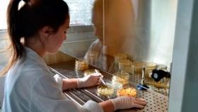 Crean un programa para controlar los límites máximos de residuos en alimentos de exportación