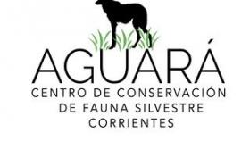 Desarrollan un protocolo actualizado para el manejo de fauna silvestre en el Centro de Conservación Aguará