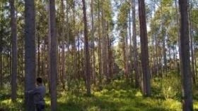 REDFORar: una alianza que busca potenciar y promover el desarrollo forestal