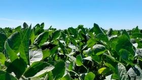 BASF prepara el lanzamiento de 5 nuevas variedades de soja para el 2021