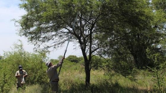Semillas autóctonas para reforestar Santa Fe