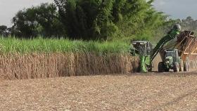 El mes seco favorece la época de la cosecha