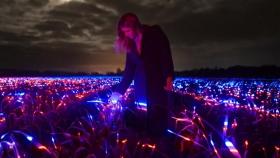 Este campo iluminado no solo es bonito, está ayudando a cultivar
