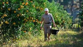 Aumenta el monto de desempleo para los trabajadores rurales
