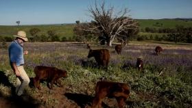 Carbono del suelo: ¿qué papel puede desempeñar en la reducción de las emisiones de Australia?