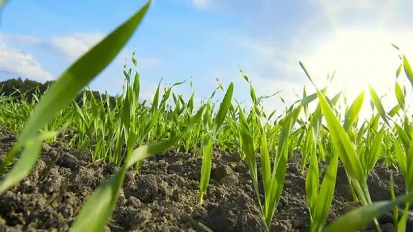 Crece el mercado de productos biológicos
