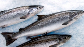 El gigante chileno de la producción de salmón Atlántico pone su vista en el mercado europeo
