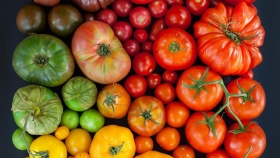 Estados Unidos: tomate manía