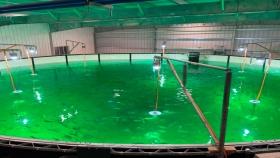 La tendencia que está revolucionando a la acuicultura mundial