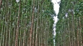 Beneficios de la actividad forestal en la producción agropecuaria