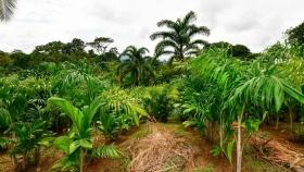 Los productos de Chololo AgroIndustrial S.A son 100% orgánicos