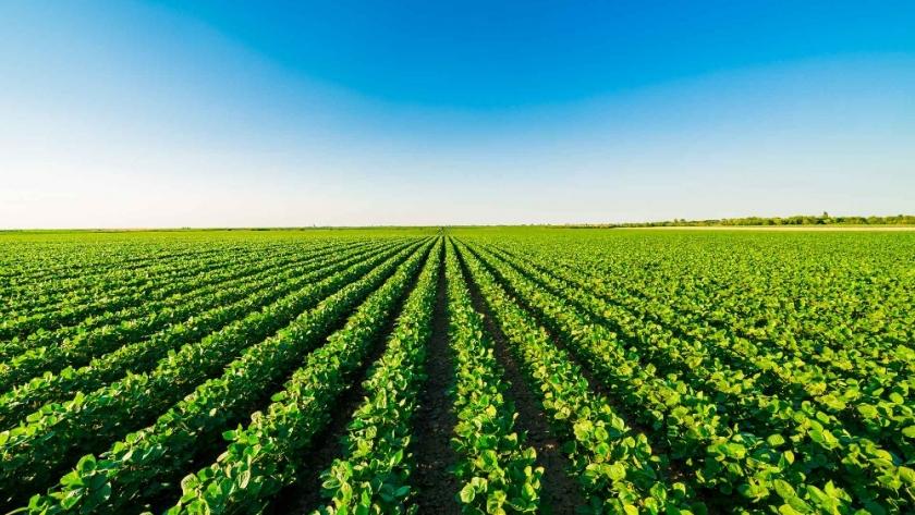 Junto a CREA, Sumitomo Chemical demuestra el alto control de malezas de sus herbicidas